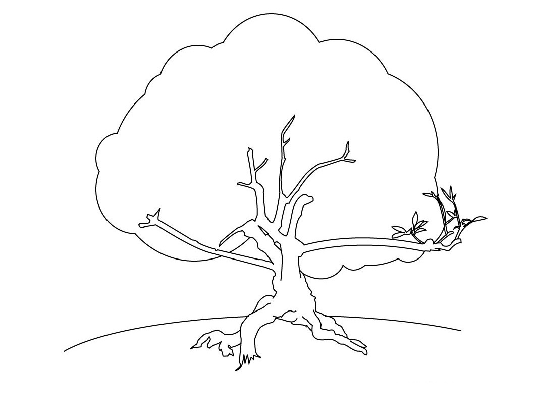 1060x820 Free Printable Tree Coloring Pages