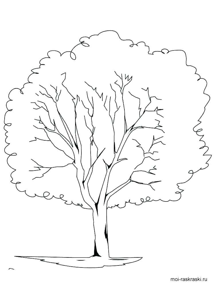 750x1000 Fall Tree Coloring Page Professional