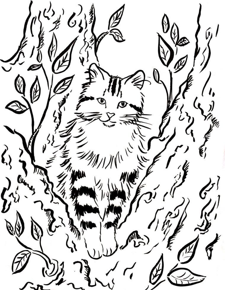 760x981 Cat In A Tree Coloring Page