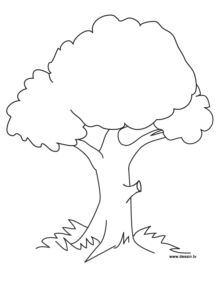 768x1024 Coloring Tree