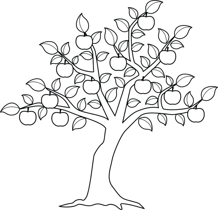 736x708 Fall Tree Coloring Page Coloring Pages Tree Leaf Fall Tree