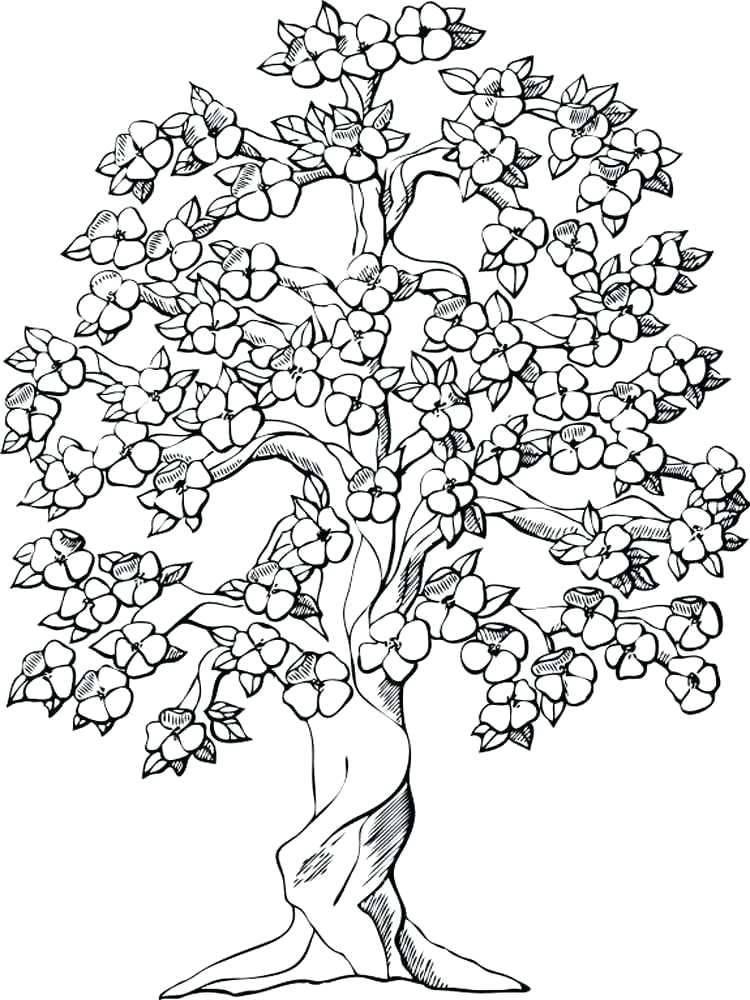 750x1000 Coloring Pages Of Trees Adult Coloring Pages Tree Coloring Pages