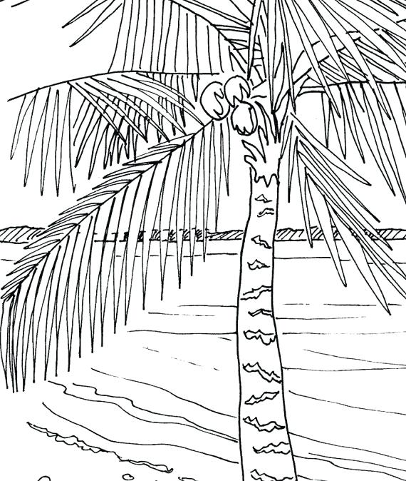 570x674 Palm Tree Coloring Pages Palm Leaves Coloring Pages Palm Tree