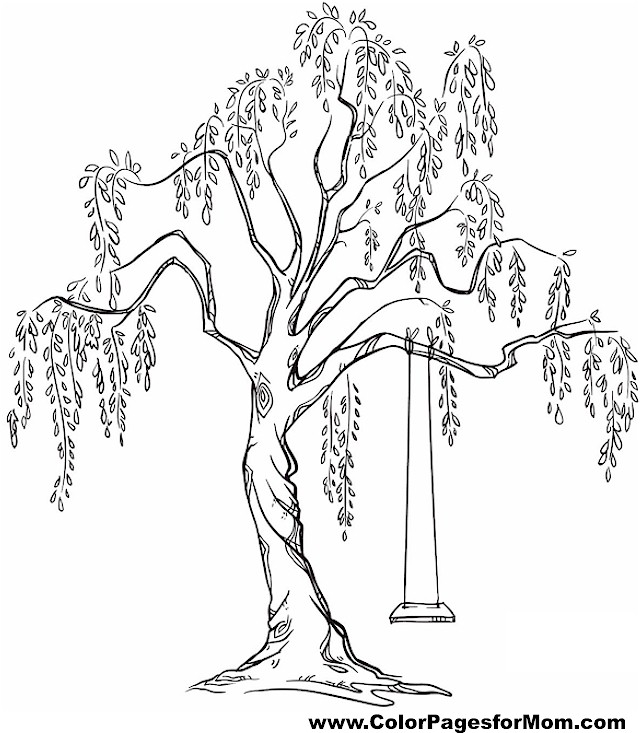 640x733 Tree Coloring Pages For Adults