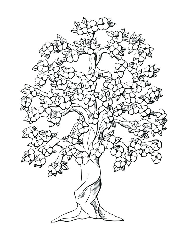 688x917 Family Tree Coloring Pages