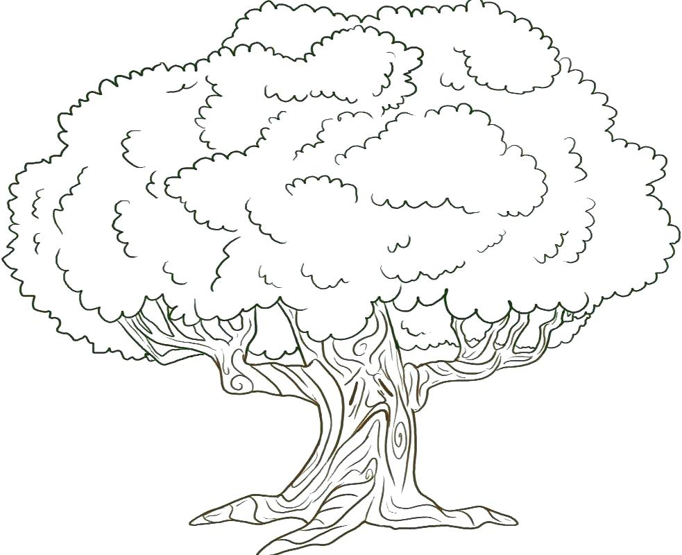 983x800 Family Tree Coloring Sheets Family Tree Coloring Page Family