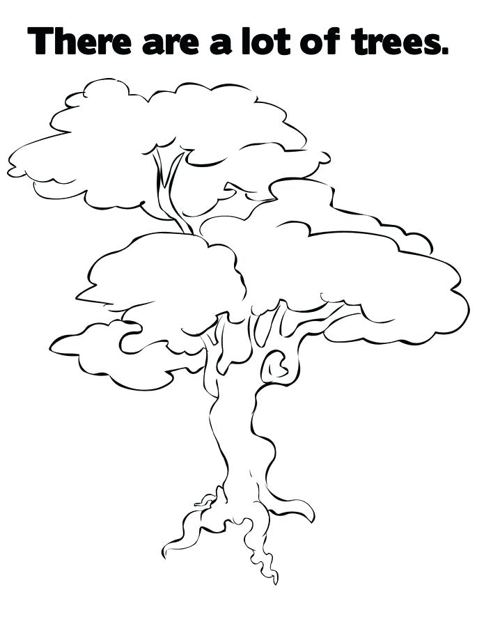 685x886 Free Printable Tree Coloring Pages For Kids Pecan Tree Coloring