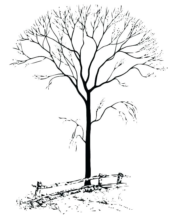 618x749 Autumn Tree Coloring Pages Printable Tree Coloring Pages Flowers