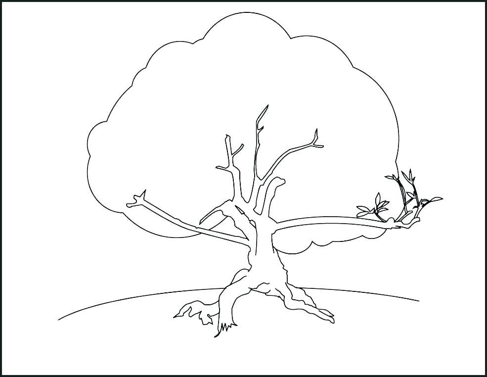 985x762 Printable Tree Coloring Pages Fall Tree Coloring Page Free