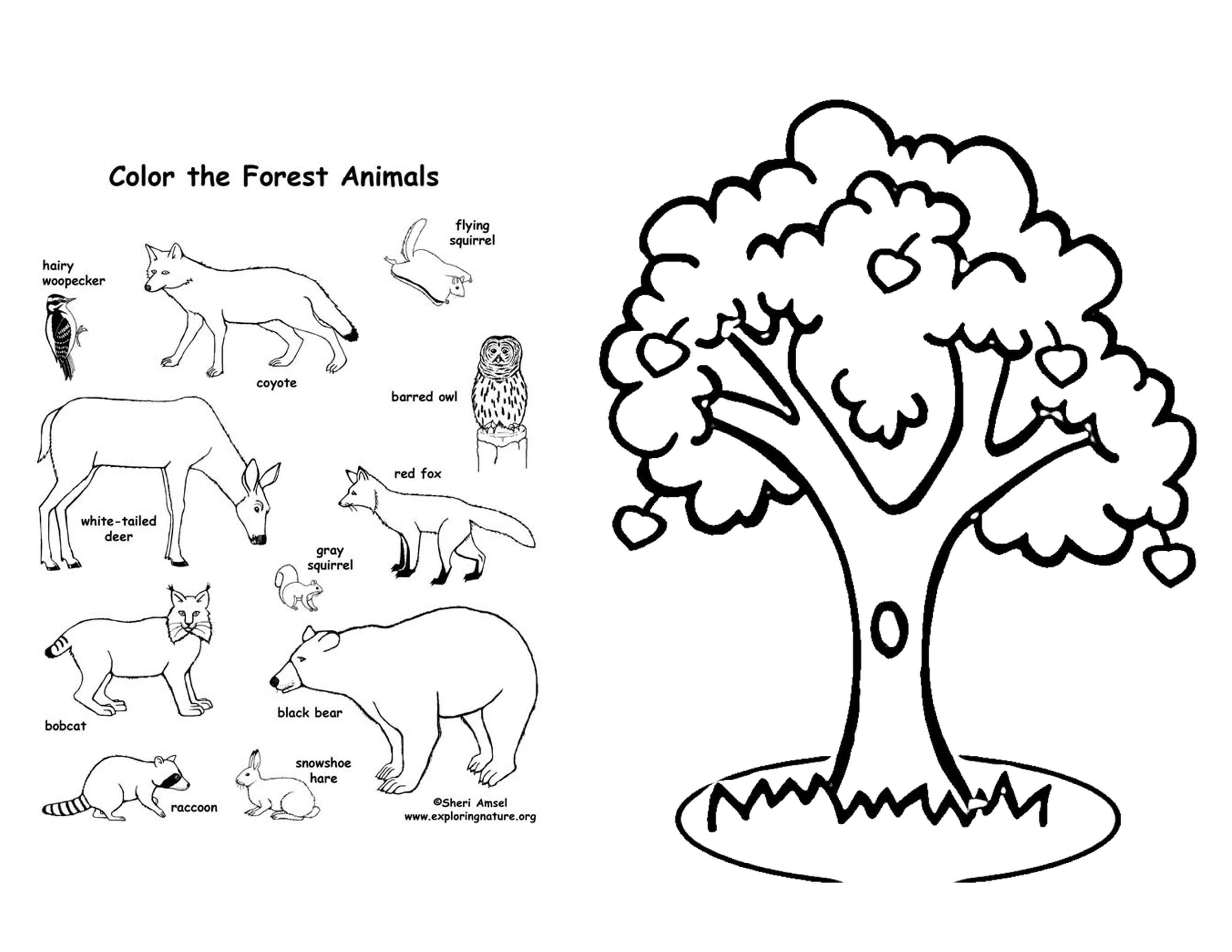 3300x2550 The Last Fairy Apple Tree Coloring Pages Printable Coloring