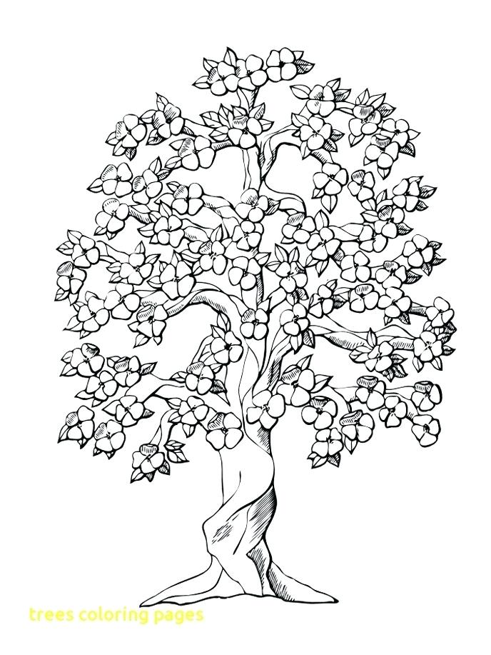 688x917 Autumn Trees Coloring Pages Kids Coloring Fall Tree Coloring Page
