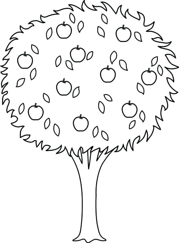 600x813 Apple Tree Coloring Page
