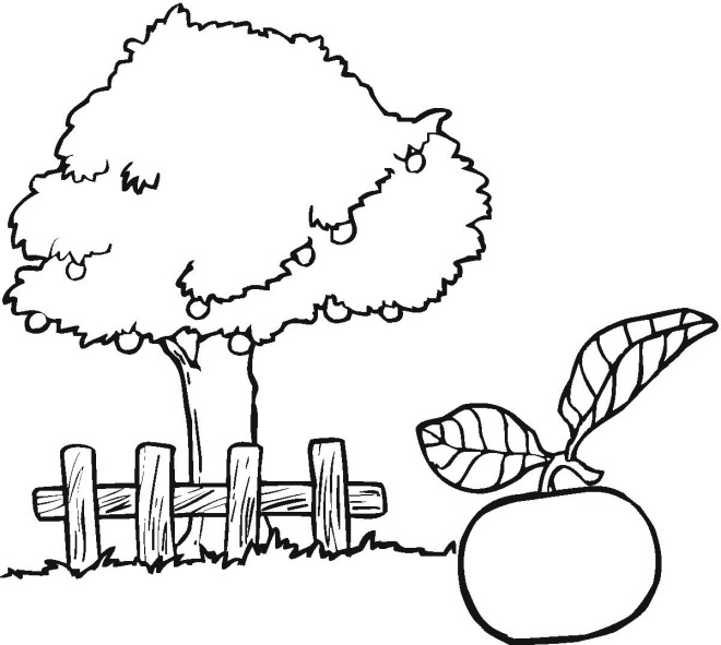 660x591 Apple Coloring Pages For Preschoolers