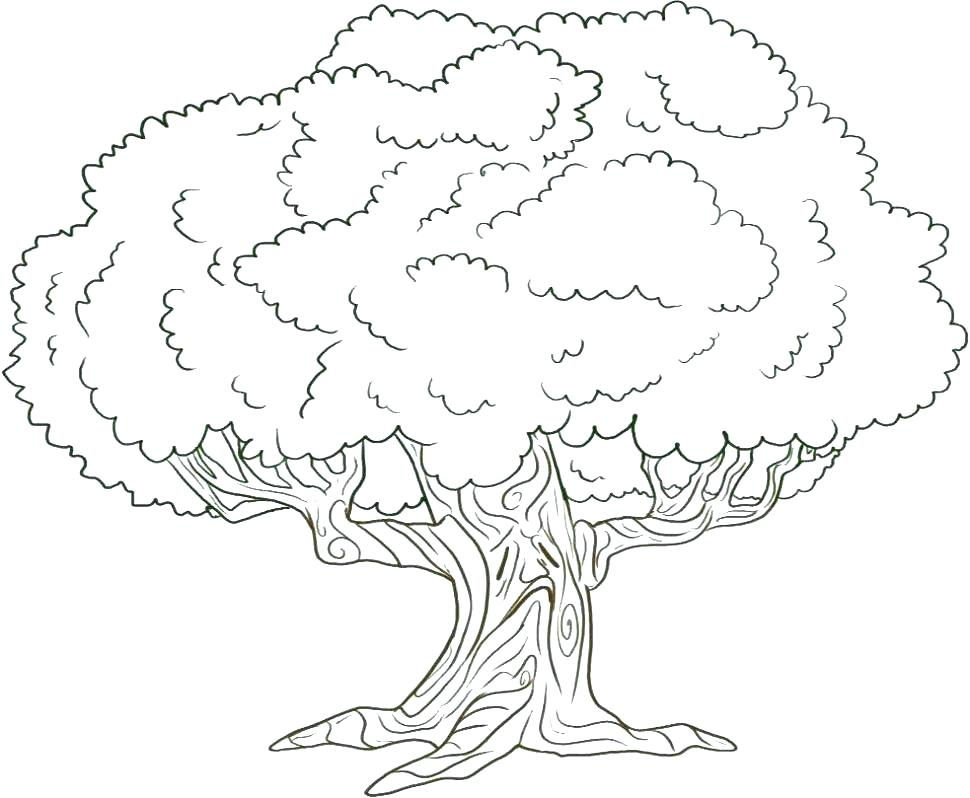 970x798 Coloring Pages Of A Tree Tree Coloring Pages Free Printable