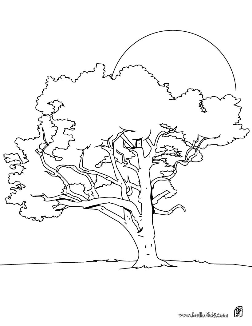 820x1060 Tree Coloring Pages
