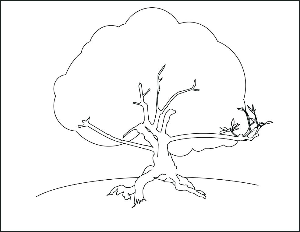 985x762 The Giving Tree Coloring Pages Free Printable Tree Coloring Pages