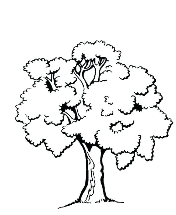 562x686 Tree Coloring Pages Free Printable Tree Coloring Pages Free