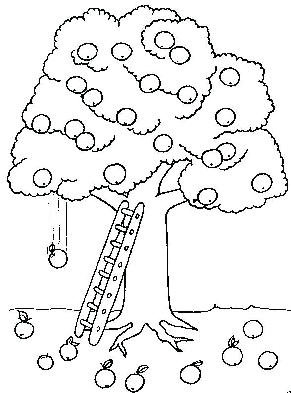 588x794 Apple Tree Coloring Pages Coloring Picture Of A Tree Coloring