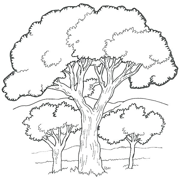 600x603 Tree Coloring Pages Fall Apple Tree Coloring Pages Tree Coloring