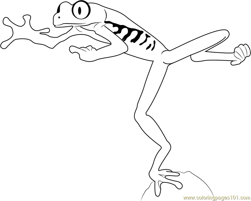 800x641 Red Eyed Tree Frog Jumping Coloring Page
