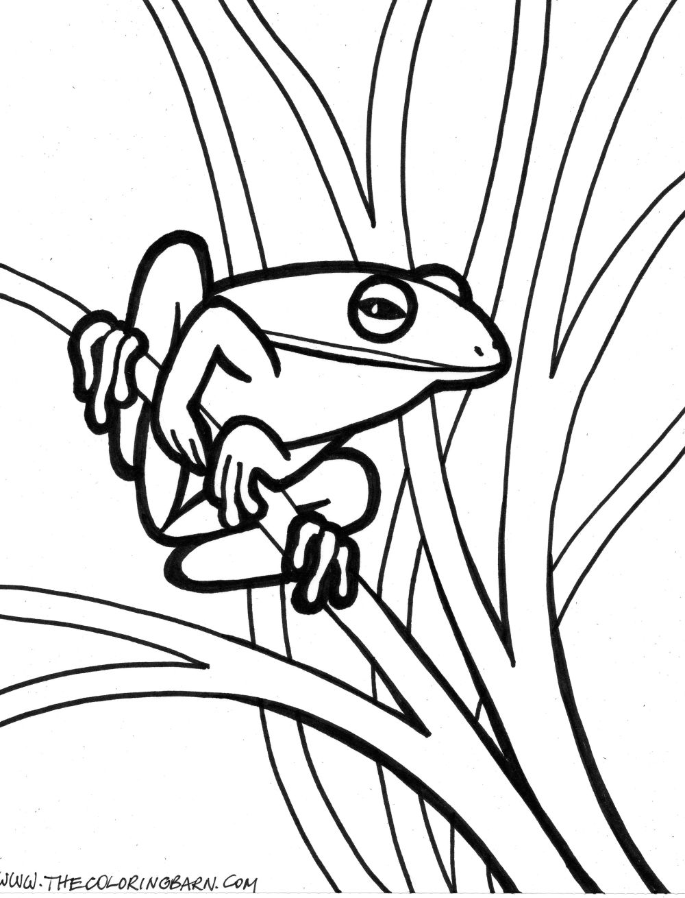 1000x1310 Skill Realistic Frog Coloring Pages Clipart Pa