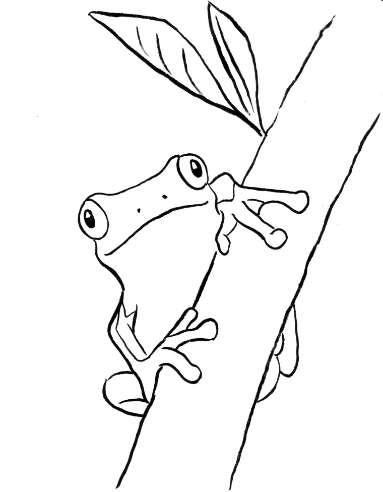 760x976 Tree Frog Coloring Page
