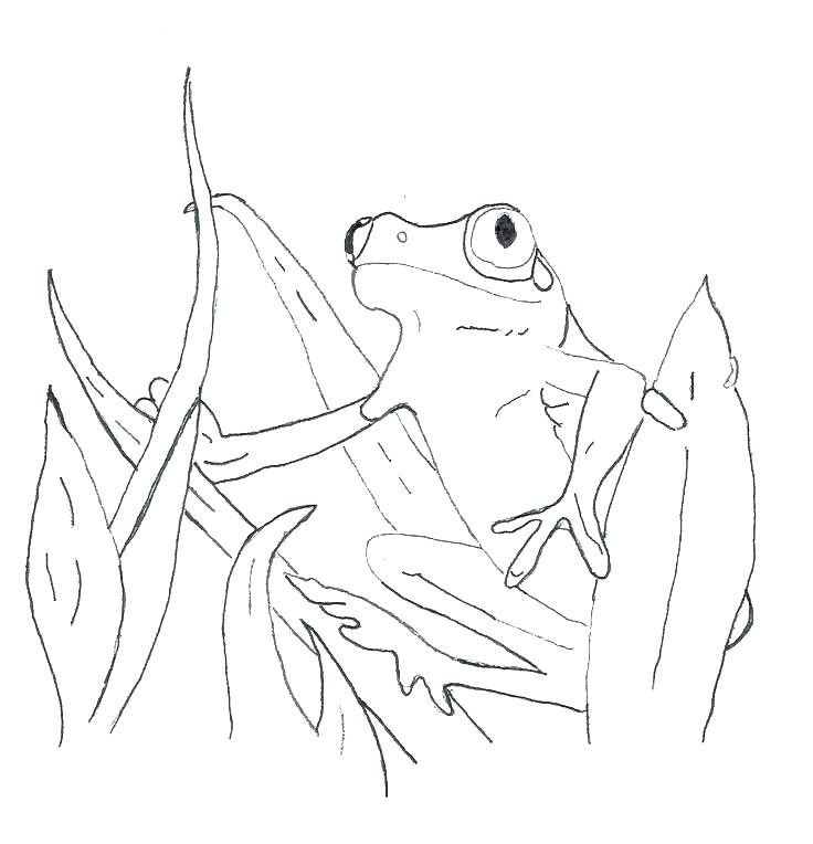 736x764 Tree Frog Coloring Page Red Eyed Tree Frog Coloring Page Red Eyed