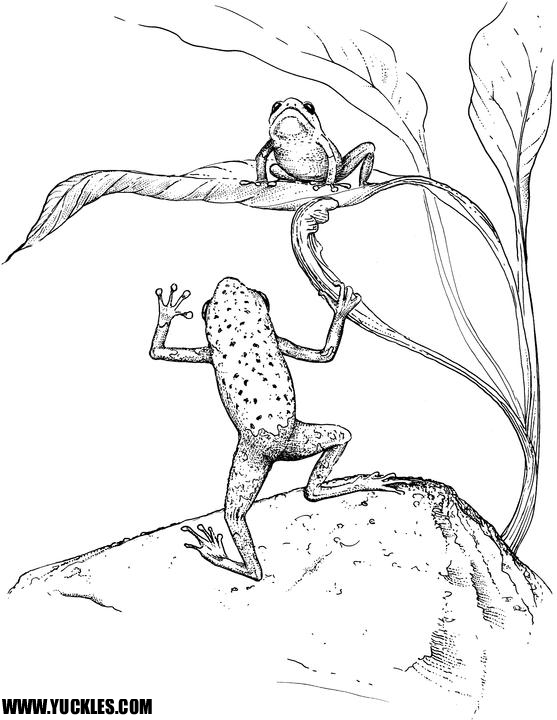 557x720 Tree Frog Coloring Page