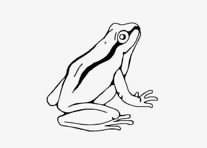 700x500 Tree Frog Coloring Pages Free Coloring Pages And Coloring Books