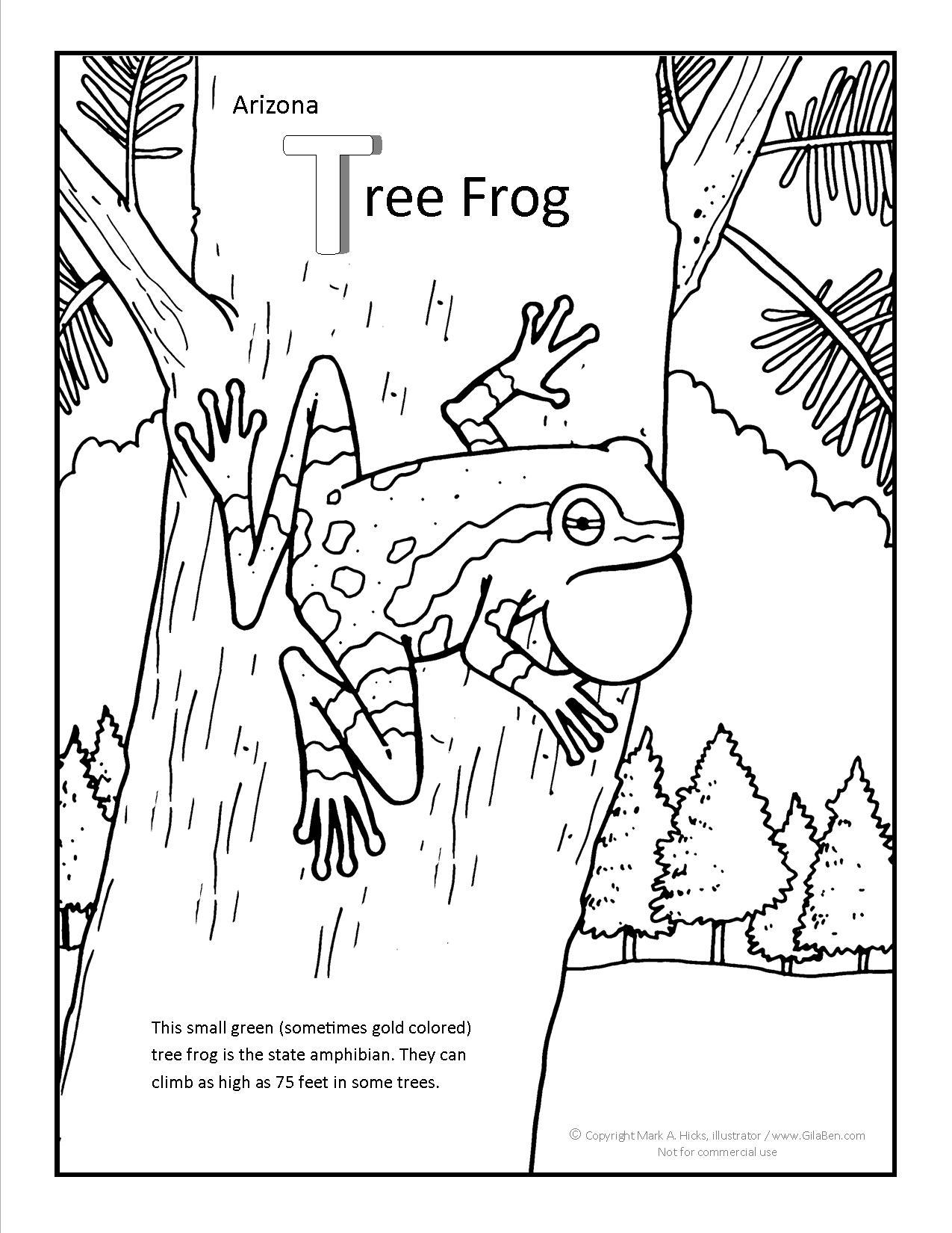 1275x1650 Arizona Tree Frog Coloring Pag