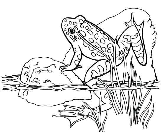 569x450 Coloring Red Eyed Tree Frog Coloring Page Pages Frogs And Toad