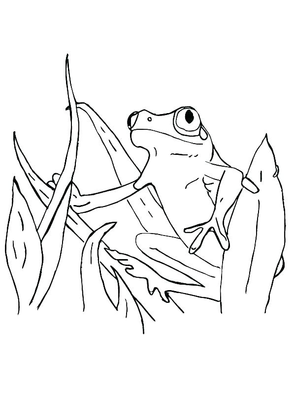595x842 Coloring Pages Of Tree Frogs Devon Creamteas