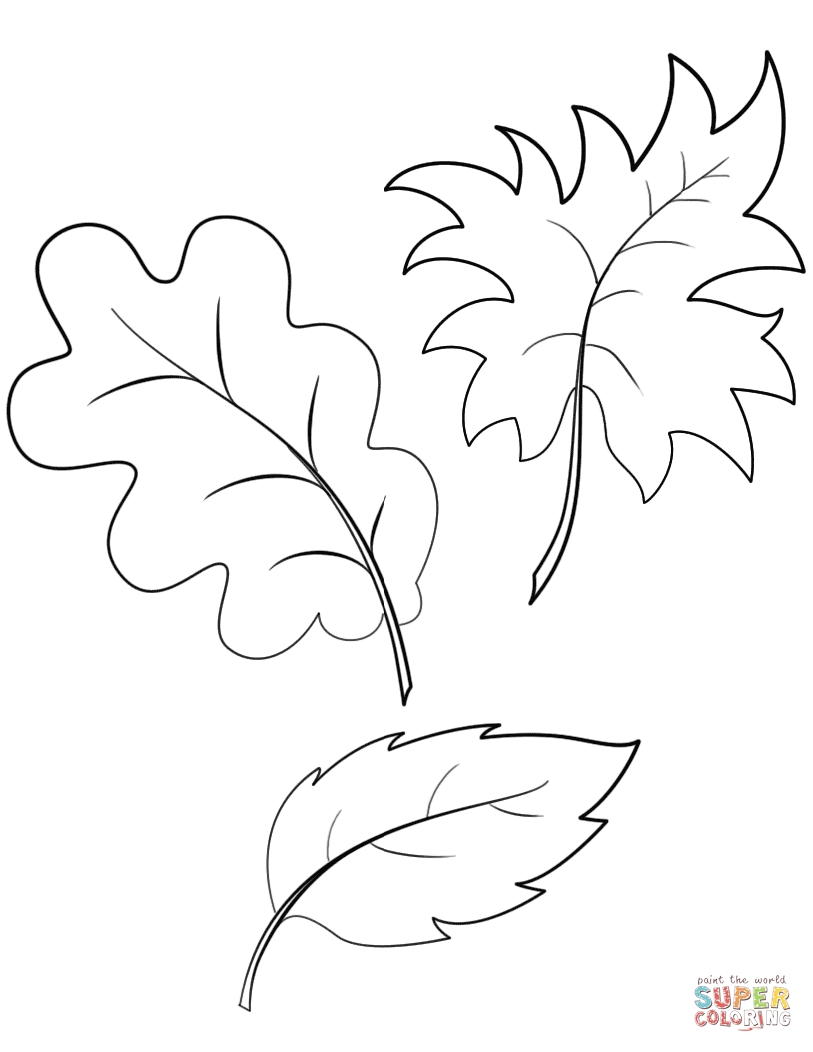 813x1052 Fall Tree Leaves Coloring Pages Download Coloring For Kids