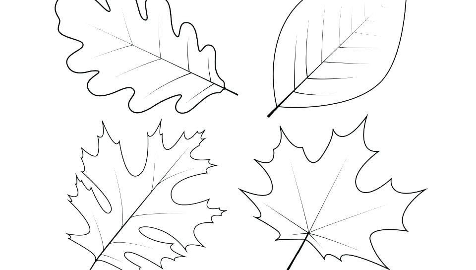 960x544 Autumn Leaf Coloring Pages Coloring Page Of Leaves Maple Tree
