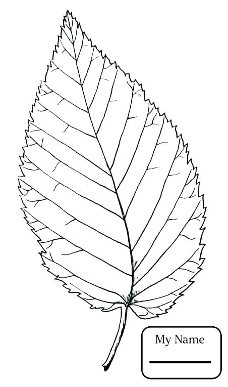 452x765 Tree Leaves Coloring Pages Tree Leaves Coloring Pages Trees Leaves