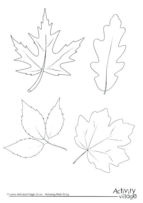 460x650 Tree Without Leaves Coloring Page Coloring Pages Of Trees Without