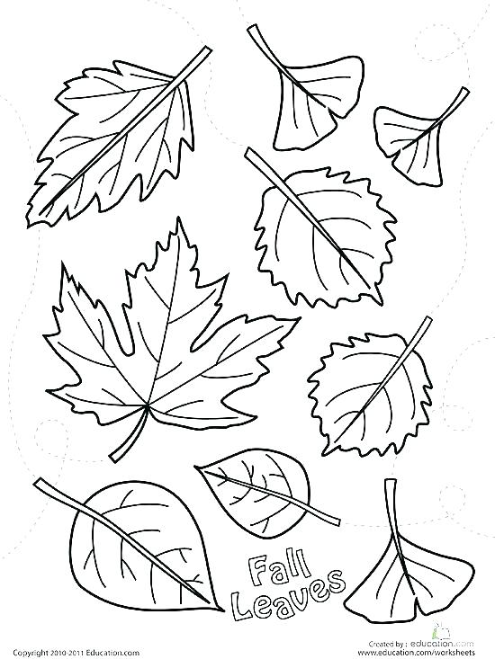 550x733 Tree Without Leaves Coloring Page Trees Coloring Pages Marvelous