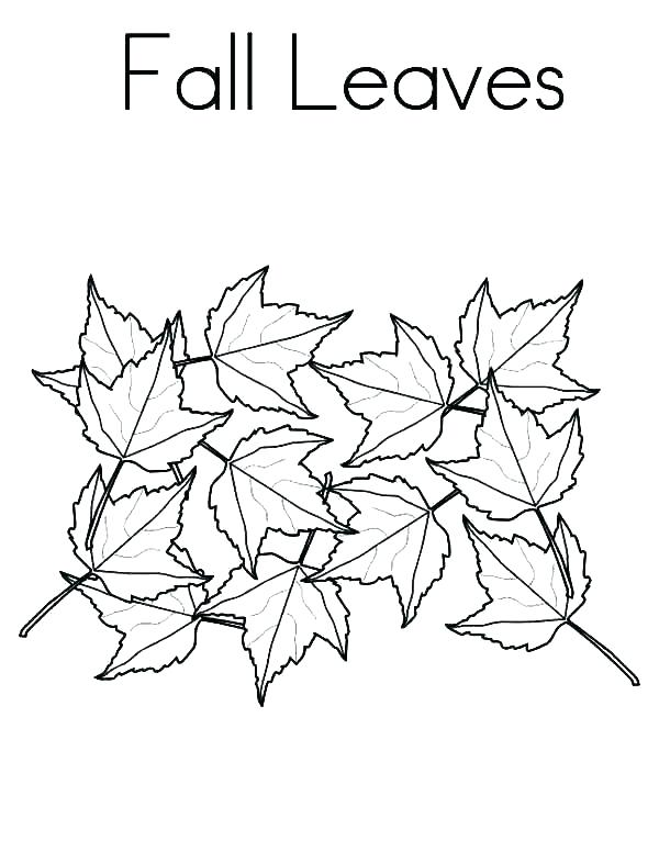 600x776 Fall Leaves Coloring Pages Icontent