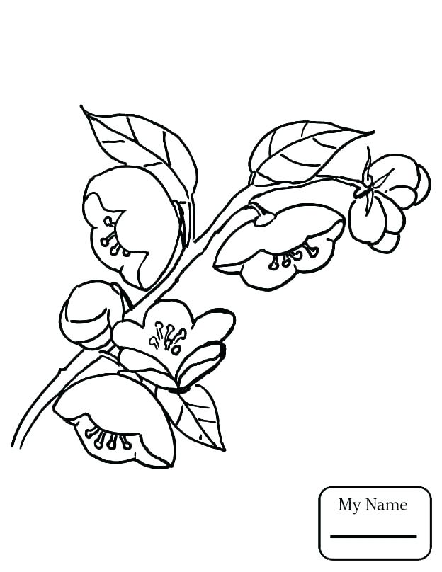 Tree Leaves Coloring Pages at GetDrawings.com | Free for ...