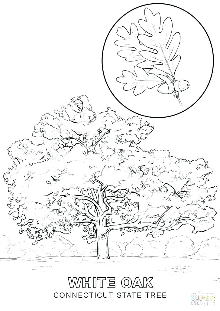 728x1028 Leaves For Coloring