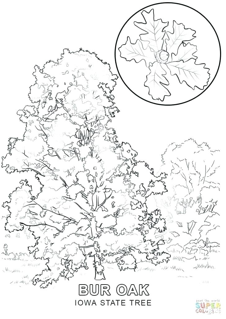 728x1028 Picture Of Tree To Color Family Tree Coloring Pages Printable Free