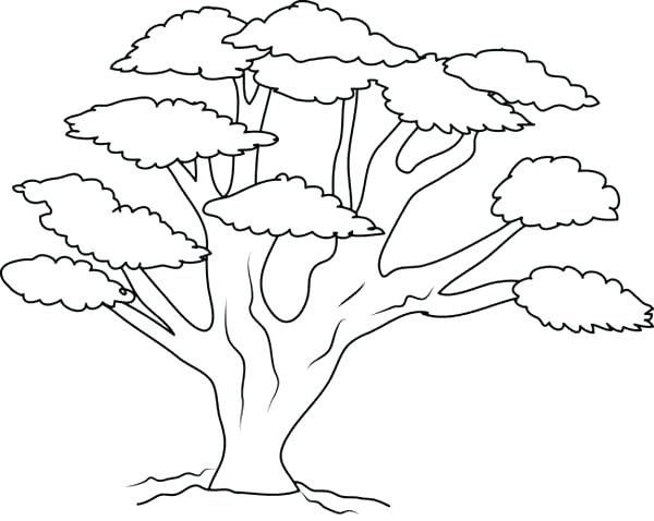 600x478 Tree Trunk Coloring Page Bell Printable Fall Tree Coloring Page