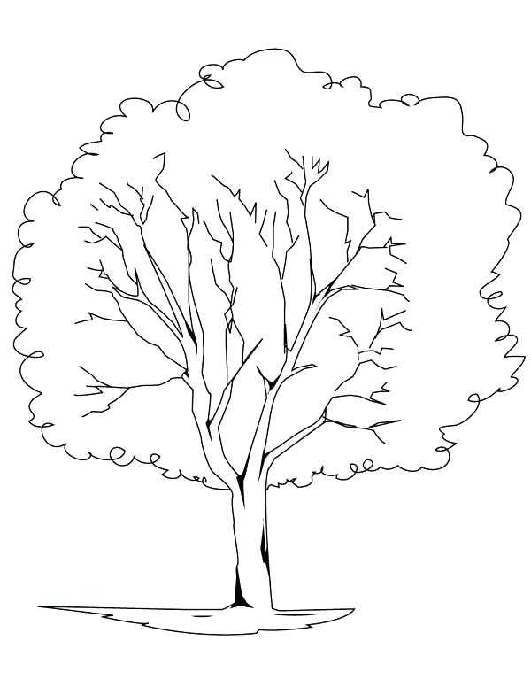 600x776 Tree Trunk No Leaves Coloring Page Bare Fall Pages Outline