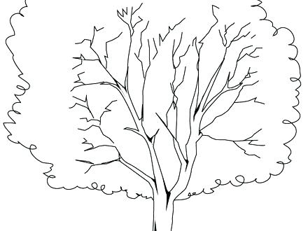 440x330 Tree Trunk No Leaves Coloring Page Bare Pages Colo