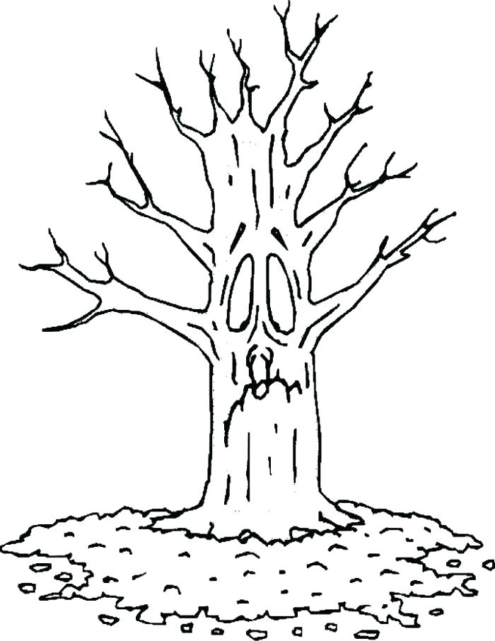 700x906 Coloring Pages Of Trees Without Leaves