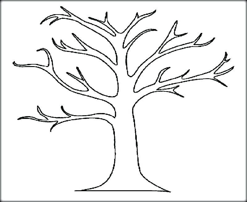 800x654 Oak Tree Coloring Page