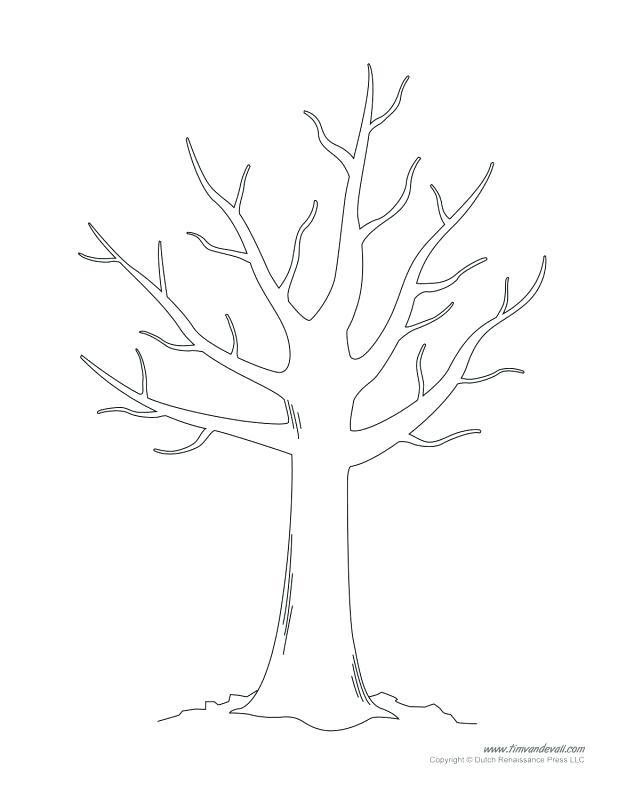618x800 Fall Tree Without Leaves Coloring Page Tree Fall Fall Tree Without