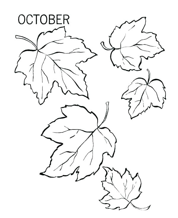 600x734 Autumn Leaf Coloring Pages Coloring Page Of Leaves Maple Tree