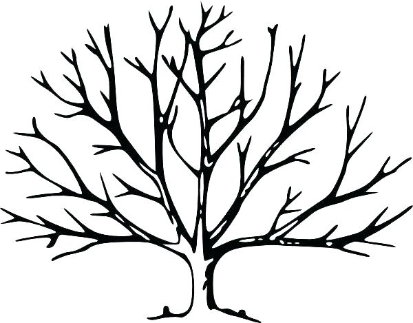 600x469 Tree Without Leaves Coloring Page Fall Tree Coloring Pages Fall