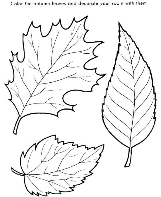 550x672 Tree Without Leaves Coloring Page Printable Fall Coloring Pages